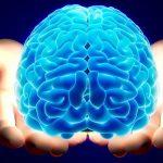 بفرمایید «مغز» در «موزهی مغز» ایران!