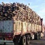 چوبآلات قاچاق در رشت کشف و ضبط شد