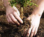 تخریبکنندهی محیط زیست به کاشت نهال محکوم شد