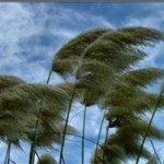 گیلانیان فردا منتظر باد گرم باشند/ باز هم احتمال آتشسوزی جنگلها وجود دارد