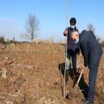 دانشگاه گیلان پروژهی درختکاری سال ۹۹ را کلید زد