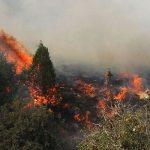 فرماندهی یگان حفاظت منابع طبیعی گیلان: دود از «کندهها» بلند میشد