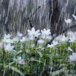 «سه روز» مانده به «برف و باران» در گیلان